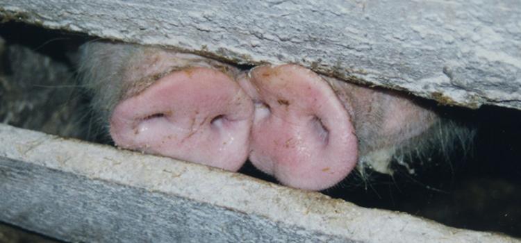 USR își respectă angajamentele asumate și solicită o nouă dezbatere publică în cazul fermei de porci