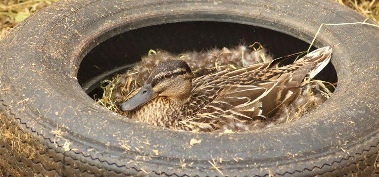 Natura nu este groapă de gunoi!