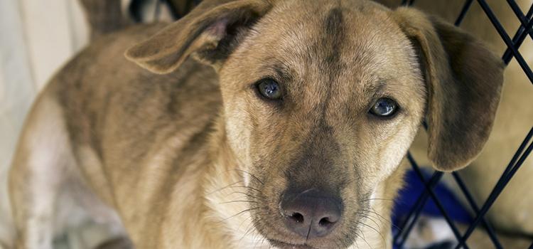 Ai cui sunt câinii fără stăpân? Soluții propuse în urma dezbaterii